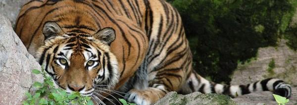 Lo zoo di Napoli è in restauro