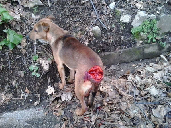 cane massacrato castellammare stabia