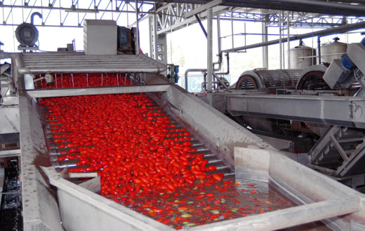 pomodoro industriale
