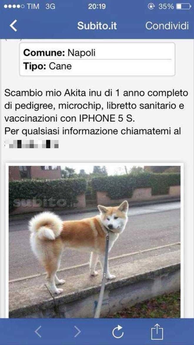 Scambio il mio cane per un iphone 5 il web si indigna for Subito annunci campania vendita arredamento casalinghi napoli