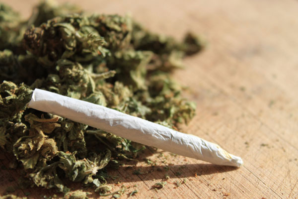Cannabis-College