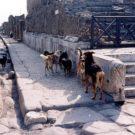 I cani randagi di Pompei diventeranno cani di quartiere