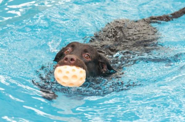 Acquadog la prima piscina per cani della campania for Piscina x cani milano
