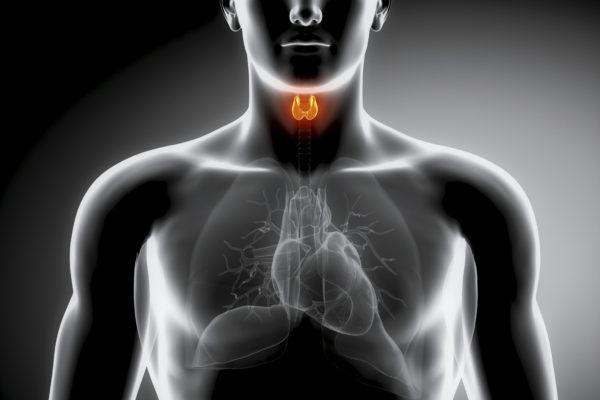 tiroide-cuore