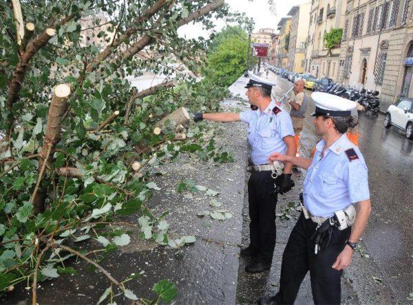 Maltempo - cade albero in via Caracciolo