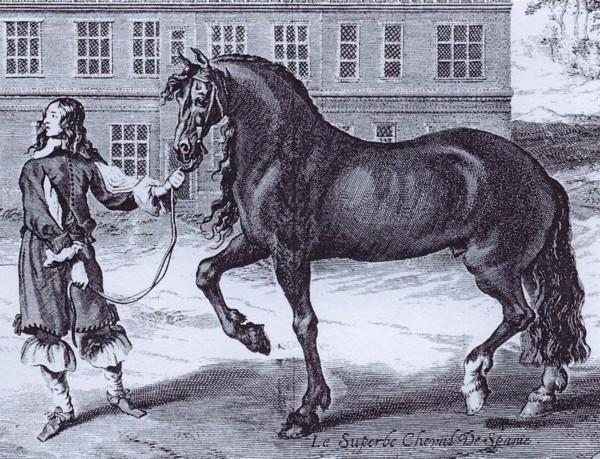 Cavallo Napoletano