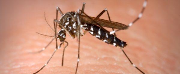 allarme zanzare tigre napoli