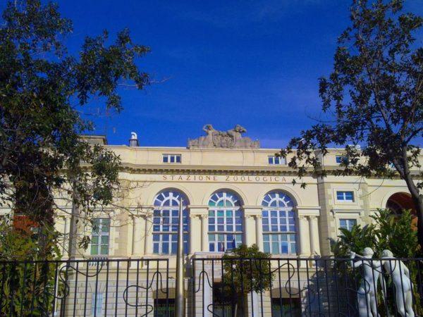 Napoli apre centro per curare tartarughe marine il for Vasche per tartarughe marine