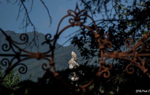 Statua San Gennaro - Villa Lucia