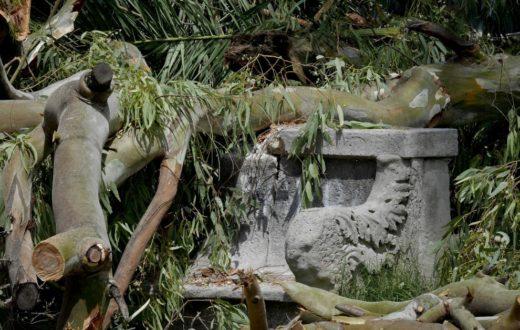 Napoli, cade ramo in Villa Comunale rompendo panchina di pietra