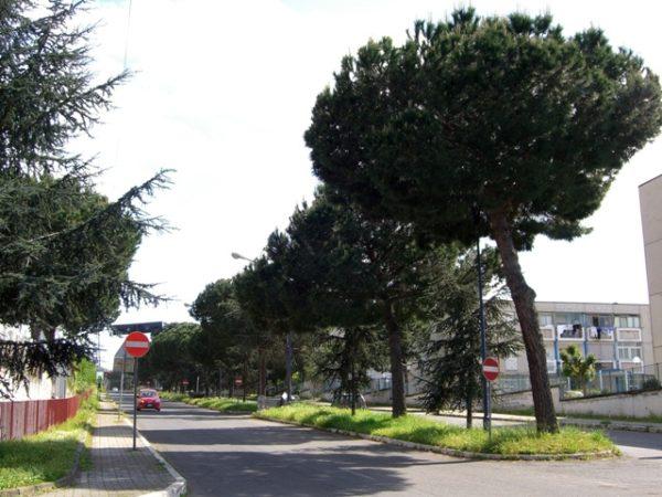 Monteruscello