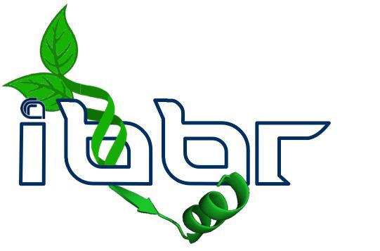 IBBR-copia