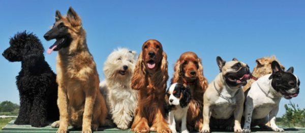 Spazio ai cani, esposizione canina amatoriale a Madonna dell'arco