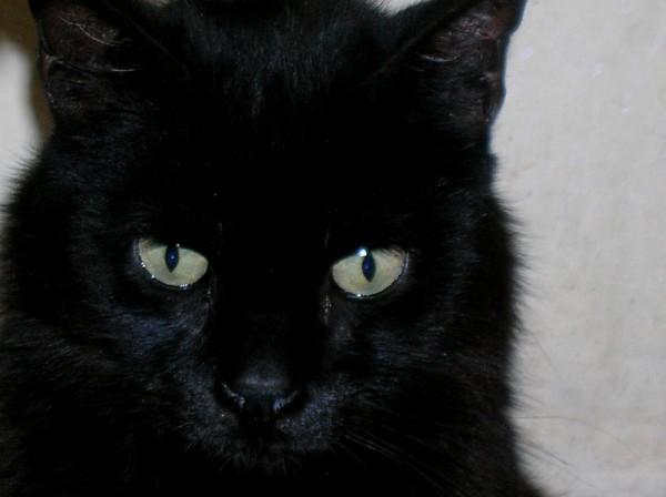 Gatto nero e superstizione napoletana
