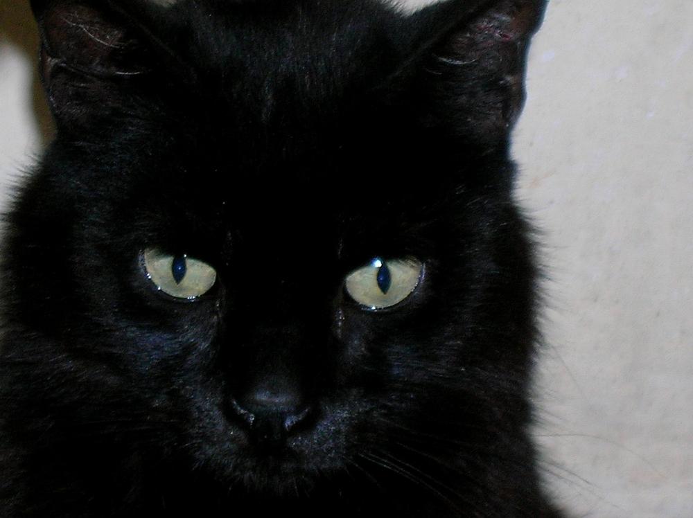 I Napoletani Credono Nella Superstizione Del Gatto Nero Ecco Come