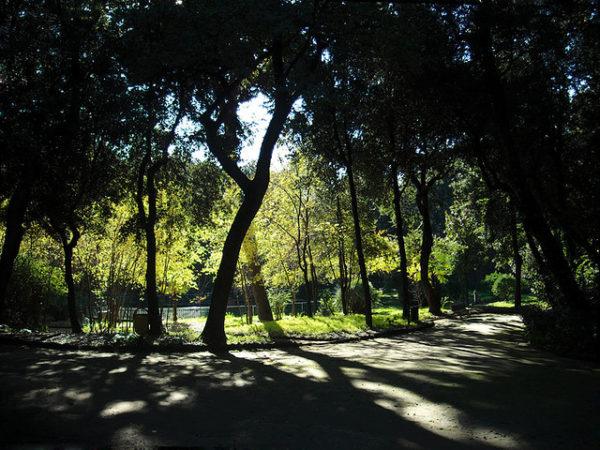 bosco di portici