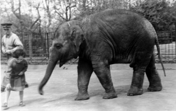 detto elefante