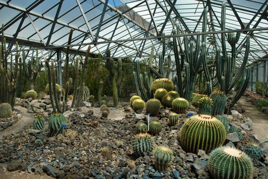 serra succulente