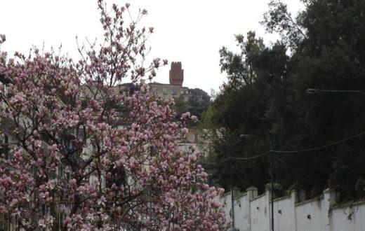 colline in fiore