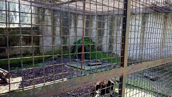 zoo - gabbia