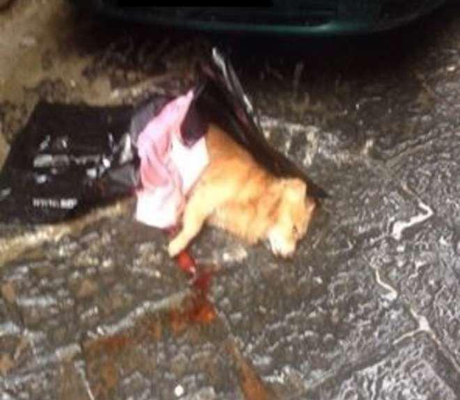 cane ucciso1