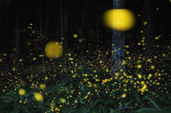 Le lucciole guardiane, alla scoperta della foresta di Cuma