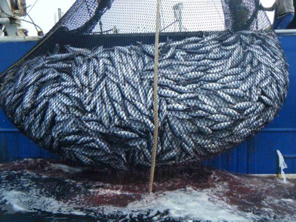 Rete di pesci