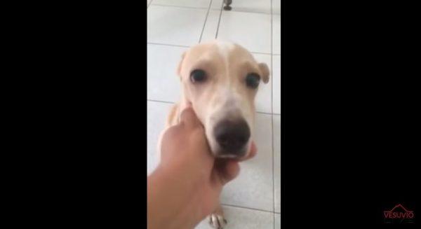 pianto disperato cane abbandonato