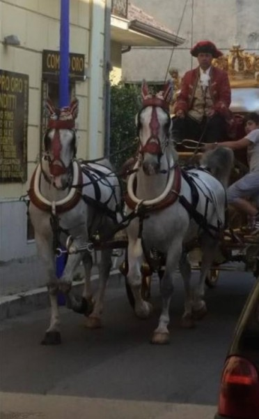 cavalli carrozza d'oro