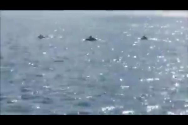 delfini a castellammare