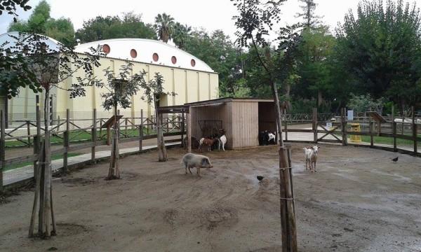 Zoo di Napoli - particolare dell'area fattoria