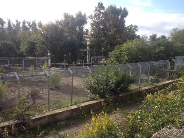 Zoo di Napoli - prossima area delle tigri