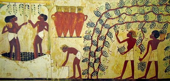 vendemmia-egizia 1