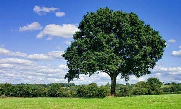 cimiteri morte albero urna bios