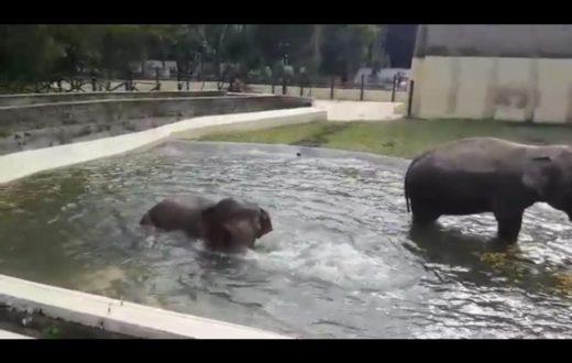elefanti zoo di napoli