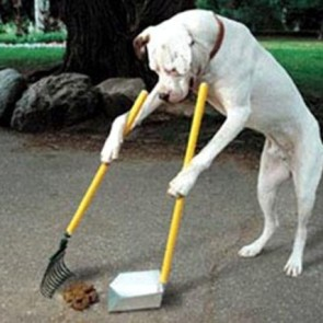 Feci canine