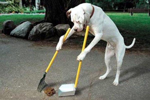 Risultati immagini per cartello pulire cacche cani
