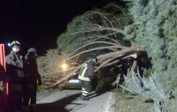 albero cade su auto