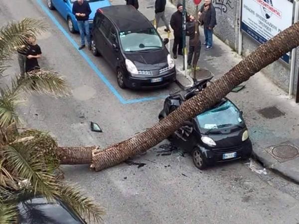 napoli, albero sdradicato dal vento
