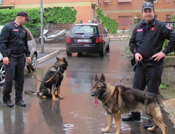 unità cinofila carabinieri studente scomparso