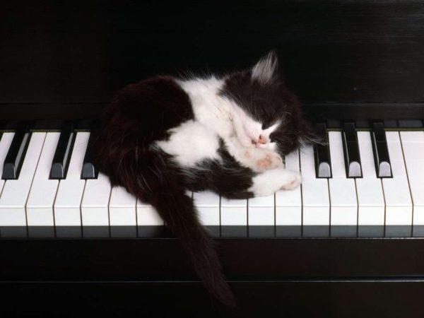Buonanotte ai suonatori