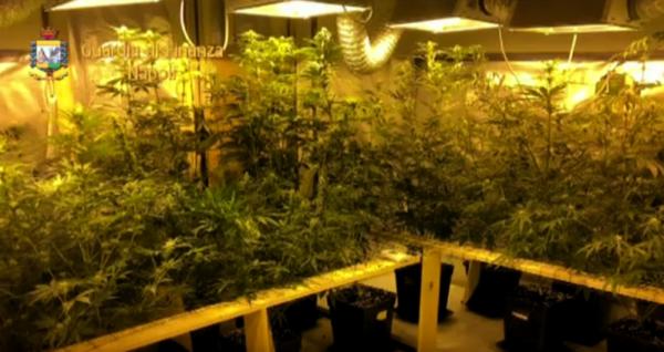 marijuana guardia di finanza napoli