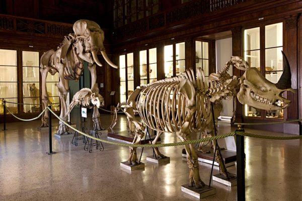 museo zoologico napoli