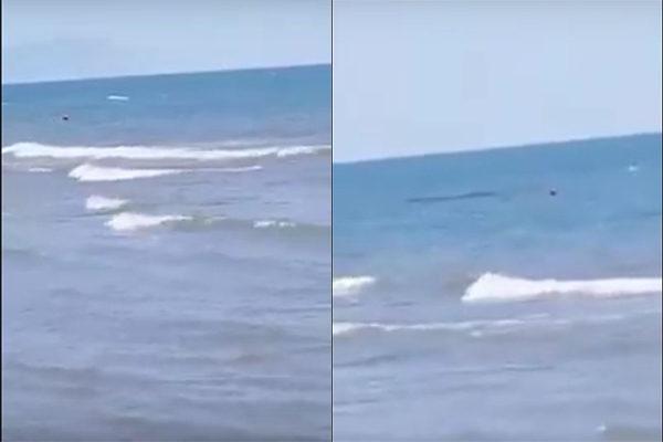 Avvistamento squalo mondragone