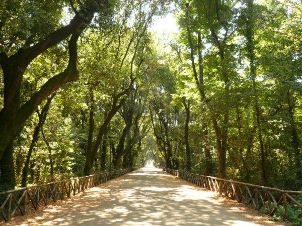 viale_centrale_-_parco_di_capodimonte