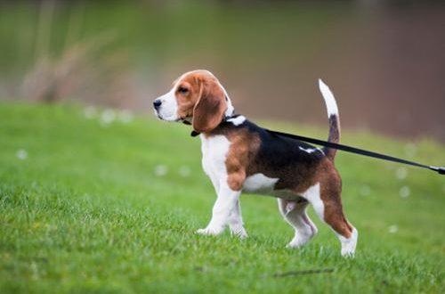 ottaviano parco cani