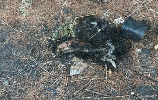 Gatto Morto sul Vesuvio