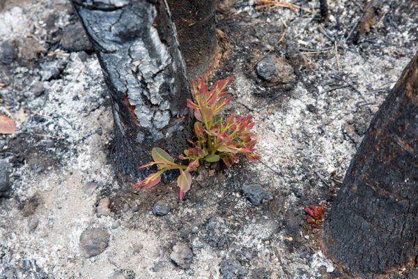 Incendi sul Vesuvio: preso piromane 24enne