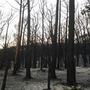 Vesuvio dopo emergenza incendi