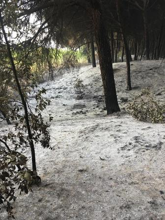Vesuvio dopo incendi